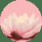 Neutralseife Liquid Weisser Lotus & Ginkgo